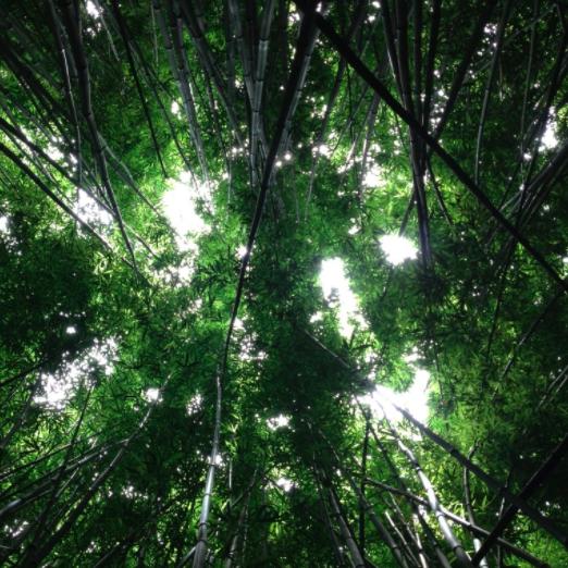 flourishing trees