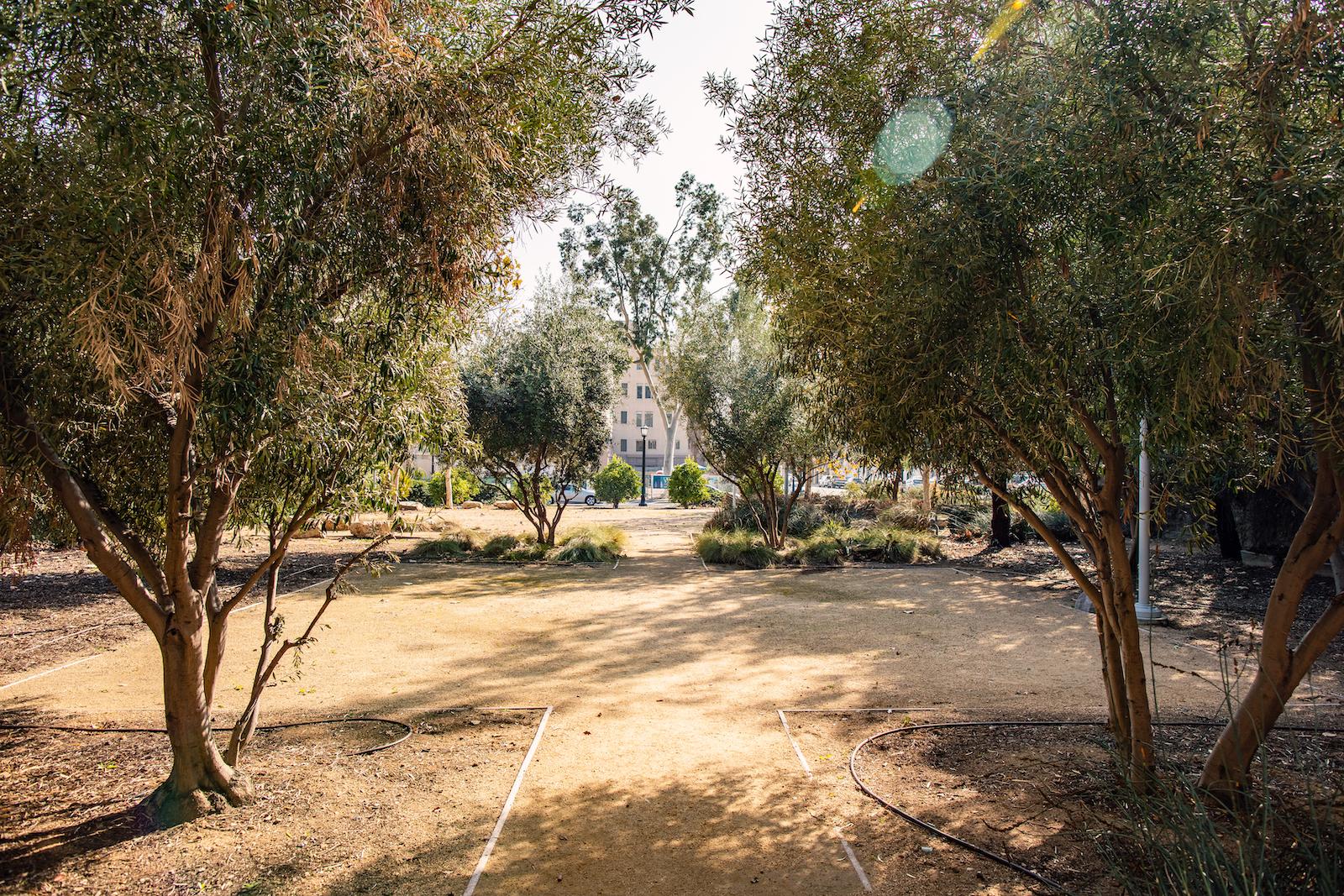 Prayer Desert Garden